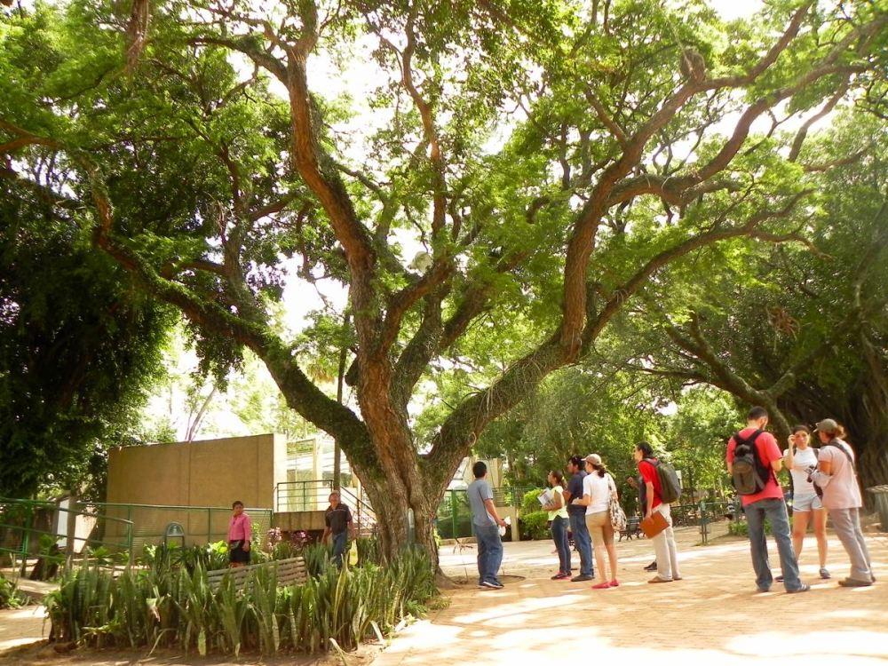 Voluntarios del Colectivo Árbol y la Revolución Jigote trabajando en el inventario de árboles en el Parque ZOO. En la primera jornada se cubrió un tercio de la superficie, en la que existen 230 árboles muy valiosos. En los próximos días se concluirá el trabajo y se presentarán los resultados.