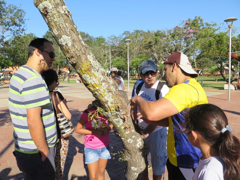 Aprendiendo sobre la importancia de los líquenes (las manchitas grisáceas) en los árboles