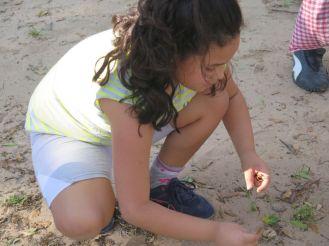 RioSierra - semillas 6