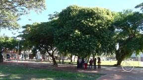 Cada árbol registrado tiene una historia qué conocer. Con un poco de práctica, estamos aprendiendo a reconocer cada una de las diferentes especies.